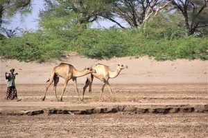 Turkana, Kenya: Furrows in the Desert