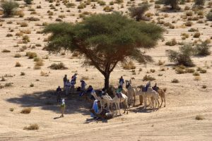 Ecology, Africa: The Great Green Wall